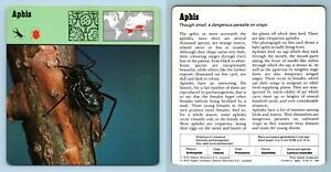 Aphis Insects 1970#x27;s Rencontre Safari Wildlife Card GBP 0.99