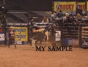 ROSS COLEMAN on COYOTE UGLY ACTION PBR PRO BULL RIDING 8quot; by 10quot; PHOTO