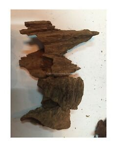 Agarwood Chips Oud Chips High Quality Incense Aroma Natural Wild And Rare