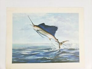 Vintage Sailfish Lithograph Print Fishing Art 11
