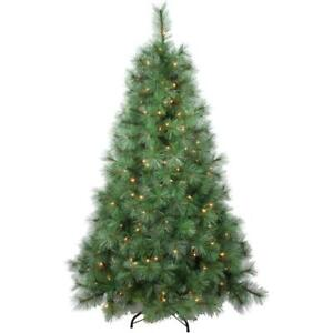 5.5' Scotch Pine Christmas Tree, with 200 Clear Lights