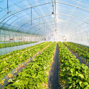 Greenhouse Clear Plastic Cover 5yr 6Mil Poly Film 20 ft. Wide x Various Lengths $199.99