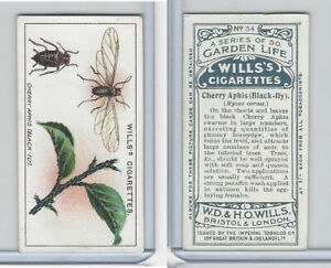 W62 82 Wills Garden Life 1914 #34 Cherry Aphis Black Fly $1.99