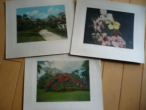 MAX FREEDOM RARE HAWAII HI COLORED PHOTOS Honolulu HIBISCUS TROPICAL LANDSCAPE
