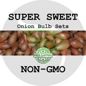 SUPER SWEET ONION SETS (Yellow Bulbs) - NON-GMO - Plant Seed Candy Garden Spring