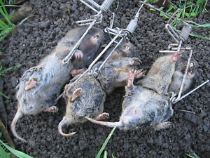 4 TRAPS-GOPHINATOR GOPHER TRAP-STAINLESS STEEL-USA MADE