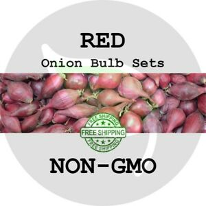 RED ONION SETS (Bulbs) - NON-GMO - Heirloom Garden Plant Start Seed Spring Fall