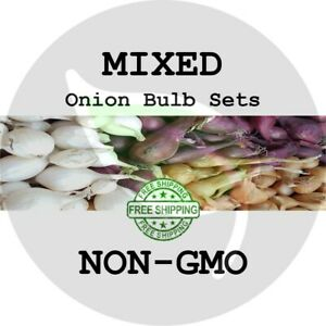 MIXED ONION SETS (Red White & Yellow Bulbs) - NON-GMO Heirloom Plant Seed Spring