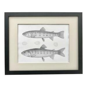 Original 19th Century  Antique Lithograph of Trout Fish c.1850 U.S.P.R.R. Exp. $125.00