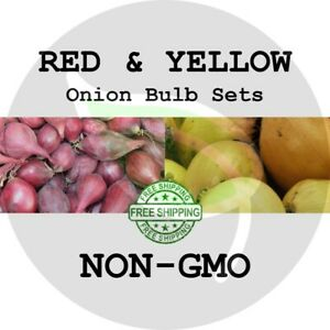 MIXED ONION SETS (Red & Yellow Bulbs) - NON-GMO Heirloom Plant Seed Spring Fall