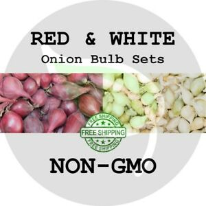MIXED ONION SETS (Red & White Bulbs) - NON-GMO Heirloom Plant Seed Spring Fall