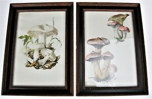 2 Framed Mushroom Pictures Color Lithograph 1962