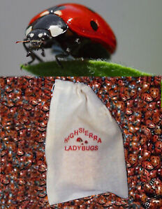300 Premium Fresh Live Ladybugs Think Fresh In Stock Now . Fast Shipping $20.00