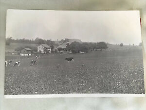Vintage 1930 Farm Photograph Pennsylvania PA printed on a post card cows farmer