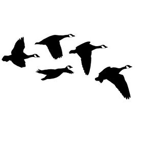 Canada Geese From the Side Hunting Decal – Hunting Sticker – 2039