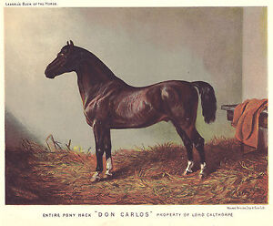 Original Antique Chromolithograph from CASSELLS HORSE PONY HACK #x27;DON CARLOS#x27; $39.95