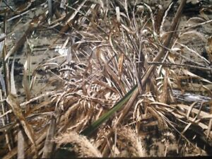 Realtree MAX 5 600D Waterproof Camouflage Fabric by the Yard CAMO901