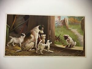 ORIGINAL 1895 CHROMOLITHOGRAPH DOG PRINT