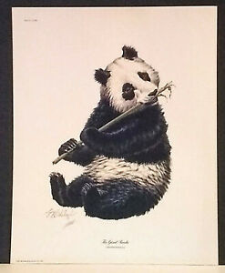 Guy Cohleach Giant Panda Signed 1972 Lithograph 16 x 20 $17.95