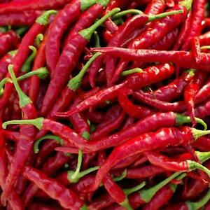 LONG RED CAYENNE PEPPER 125 Heirloom Vegetable Seeds Hot Chili Peppers