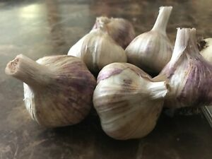 Organic Polish White Soft neck Garlic bulbs for seed or eating One LB $18.00
