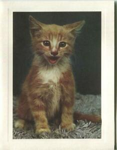 VINTAGE ORANGE WHITE TABBY CAT KITTEN MEOWING ANIMAL LITHOGRAPH PRINT NOTE CARD $199.00
