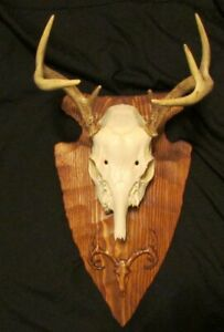 3D ARROWHEAD EUROPEAN SKULL TAXIDERMY MOUNTING PLAQUE WITH CARVED DEER SKULL