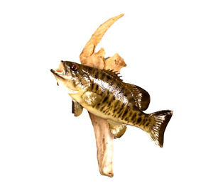 Mounted Small Mouth Bass Fish Professional Taxidermy Animal Wall Statue Gift