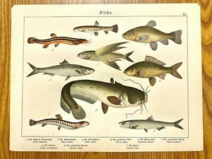 Colorful Fish Antique Chromolithograph Print Mid-to-Late 1800s in German $29.99