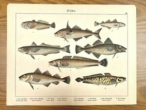 Colorful Fish Antique Chromolithograph Print Mid-to-Late 1800s in German 3 $29.99