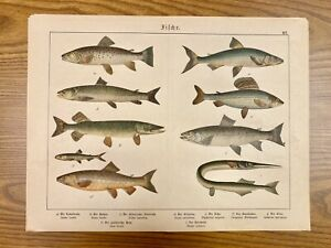 Colorful Fish Antique Chromolithograph Print Mid-to-Late 1800s in German 5 $29.99