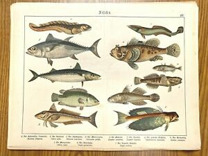 Colorful Fish Antique Chromolithograph Print Mid-to-Late 1800s in German 7 $29.99
