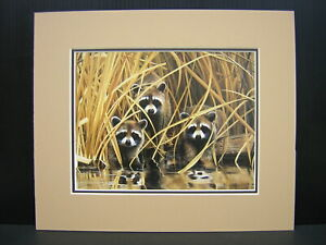 Charles Frace Raccoons in the Marsh Raccoon Matted Mini Art Print