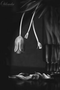 Loosing Petals Tulips 10x15 Black&White Photo Print, no photographer's logo