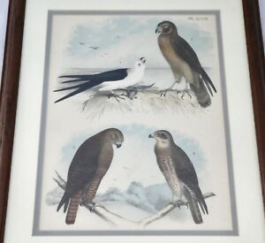 Antique STONE Lithograph Hand Painted Birds: Framed Matted. Studer Jasper.1878