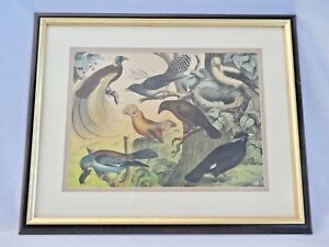 Antique STONE Lithograph 7 Handpainted Birds. Framed+Matted. Studer Jasper.1878
