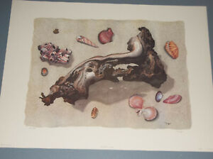 LITHOGRAPH OF DRIFTWOOD AND SEA SHELLS BY JUDY UNGER S N 17 1500 $19.95