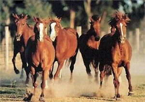 318038 ANIMAL HORSES RUNNING Horse Stampede Animals WALL PRINT POSTER $74.95