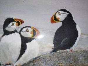 Penguin Family Puffins Watercolor Painting Original Signed Maine Artist $17.00