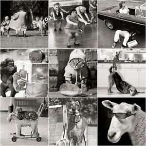 Funny rude cheeky Black & White Photographic Card Animals