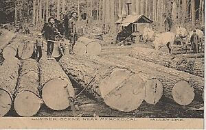 Early 1900's An Early Lumber Scene near Merced, CA California PC Very Rare