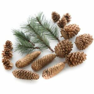 Sparkling Artificial Pine and Gold Pinecone Set | 2 Pieces