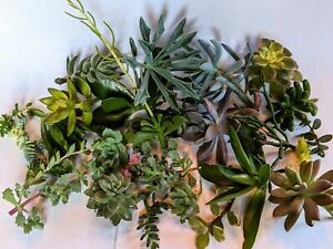 20+ Assorted Succulent Plant Cuttings and Pieces