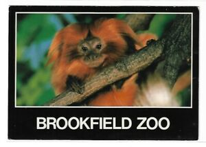 VTG Post Card BROOKFIELD ZOO CHICAGO ILLINOIS
