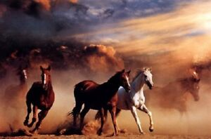 Wild Horse Stampede photography poster 24 x 36quot; Mustangs in the desert $6.50