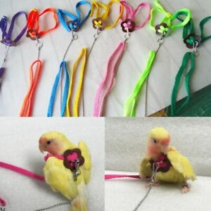 Parrot Bird Lead Leash Harness Training Rope Anti Bite Flying Band Adjustable US