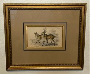 Antique Framed Hand Colored Engraving by William Jardine The Guazuti Deer $95.00