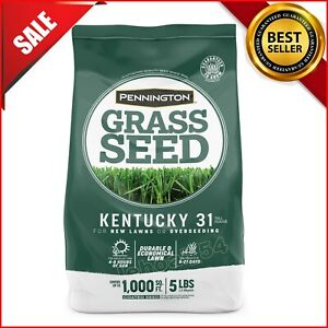 Pennington Kentucky 31 Tall Fescue KY 31 Grass Seed; 5 Pound Bag Fast Shipping