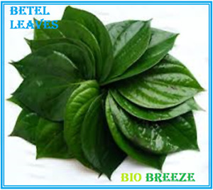 Organic Betel Leaves Dehydrated Piper betle Premium Quality HS Code 14049040 $3.20