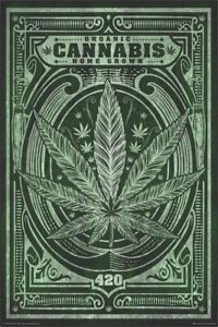 ORGANIC CANNABIS HOME GROWN 24x36 ROLLED PAPER POSTER Reefer Ganja 420 NEW $8.00